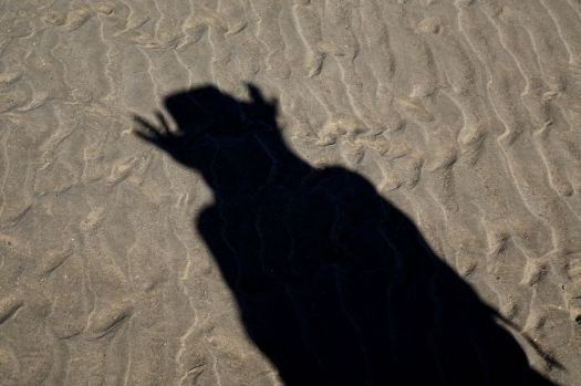 And there are shadow monsters on the beach.