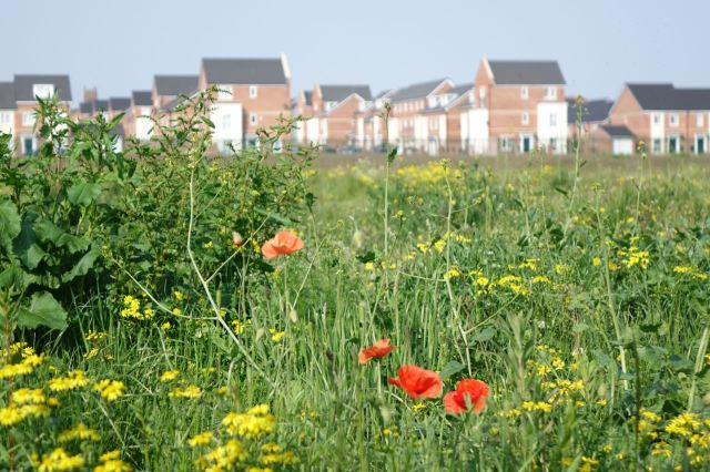 And The Poppies of Granton Road. The Road lost and not built on for years now.