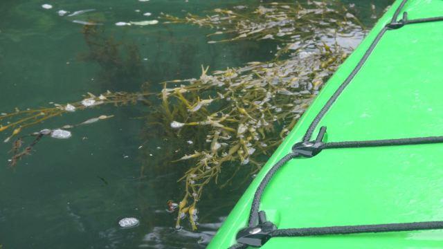 16.07 kayaking post_05
