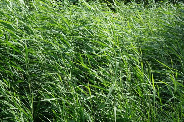 And the grasses are high.