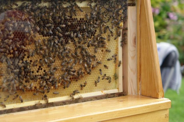 Bees, lots of them.