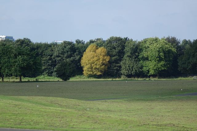 And it seems too soon but some of the trees think it's already autumn.