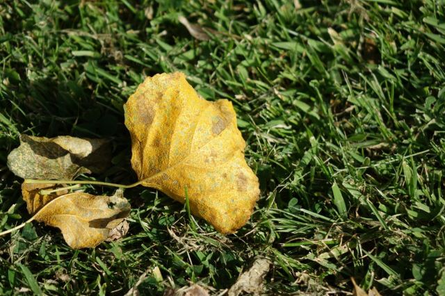 Autumn happens when it will. It's not up to us to decide.