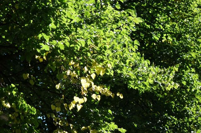 Autumn coming gently on too.