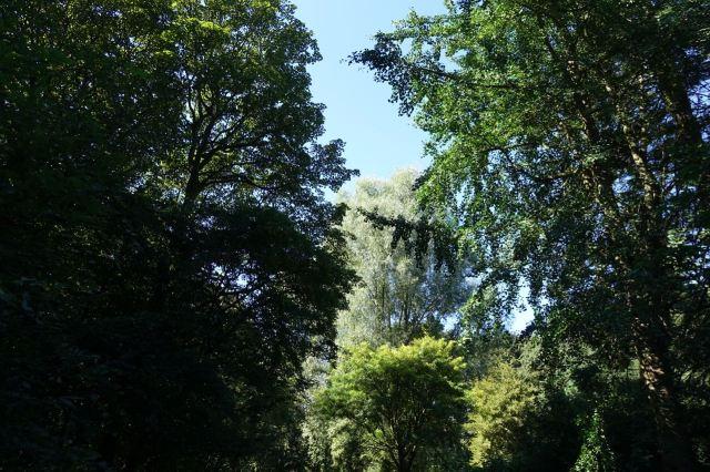 Across the bridge in Sefton Park.
