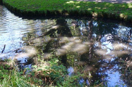 Dappled sun, reflections and ducks.