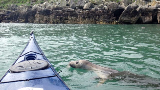 kayak_seal
