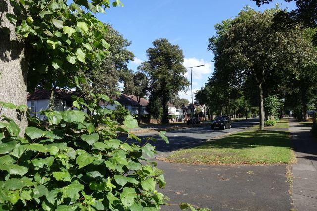 A leafy boulevard.