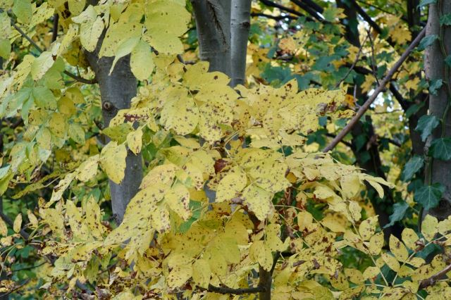 But coloured in brilliantly by the variety of the autumn leaves.