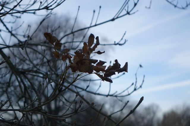The year fading like the last beech leaves on the trees.