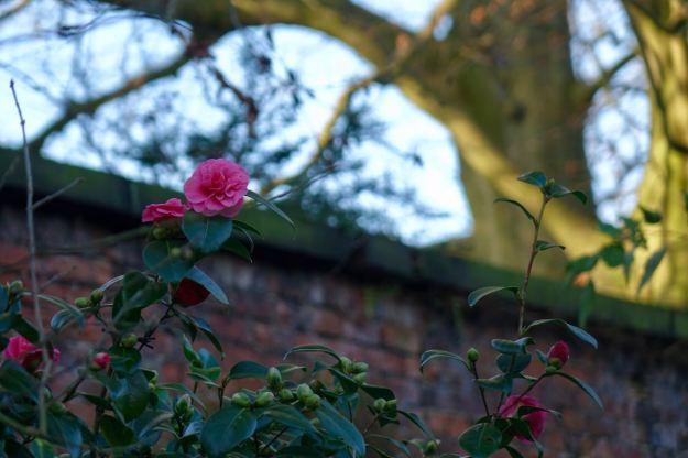 """Sitting in an English Garden waiting for the sun..."""