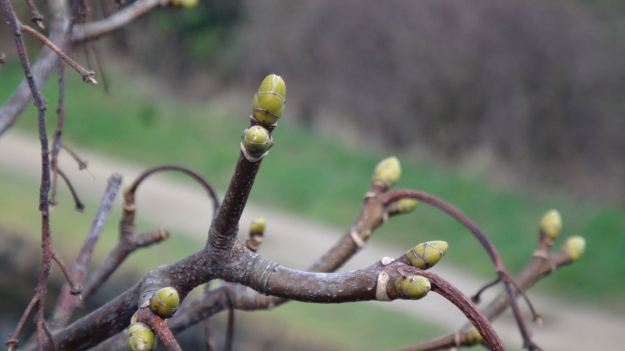 A much warmer day than last week's walk, with signs of springtime.