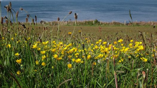 Anglesey May_36